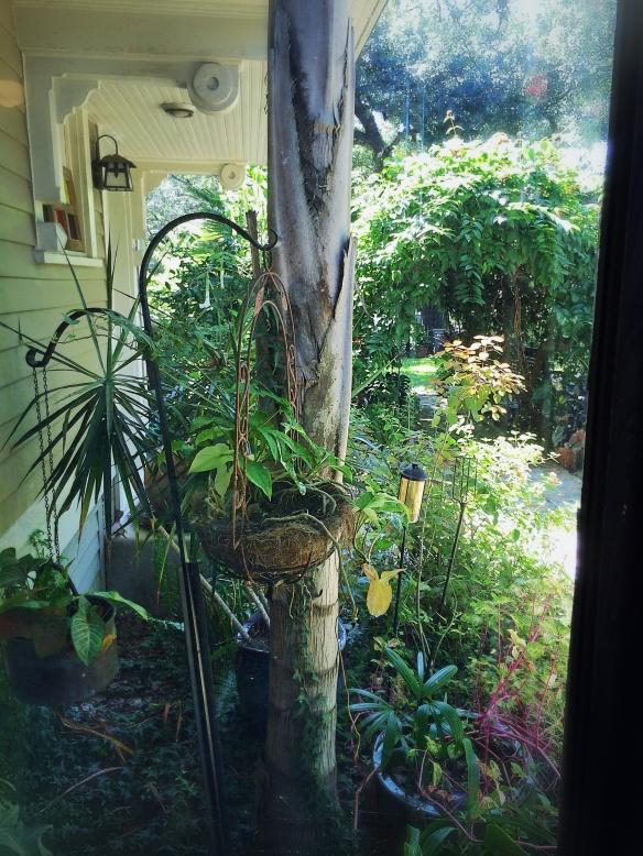 real big house garden 2