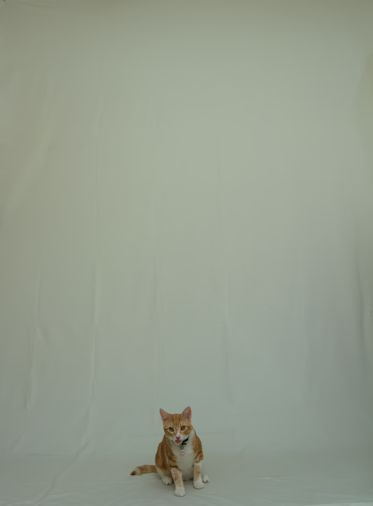 backdrop cat