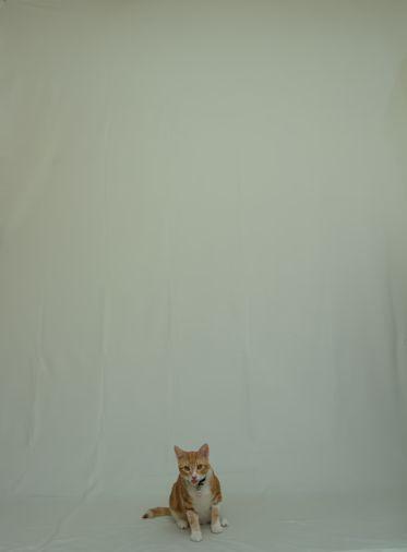 backdrop cat
