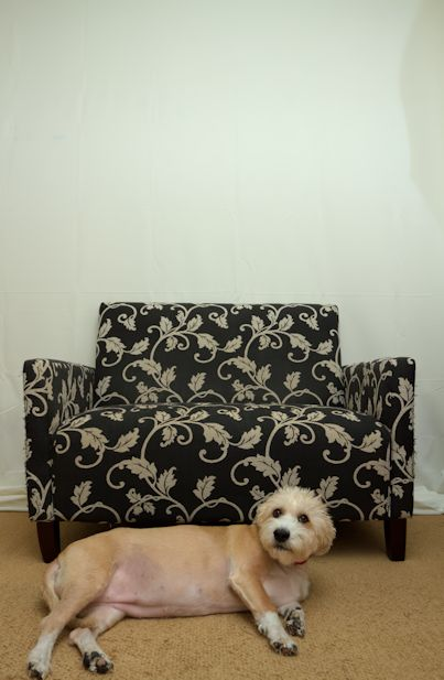 backdrop couch dog
