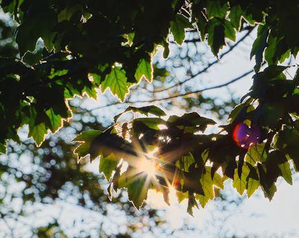 zoomtest3_Snapseed_Snapseed