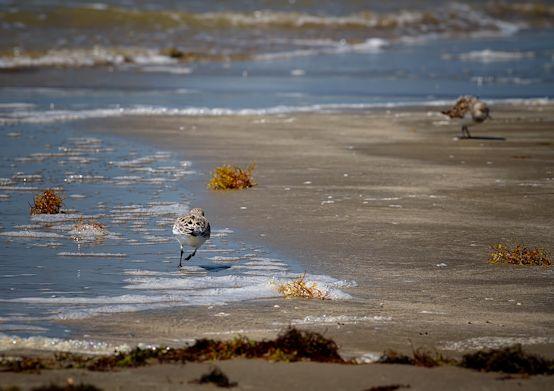 Galveston3_Snapseed