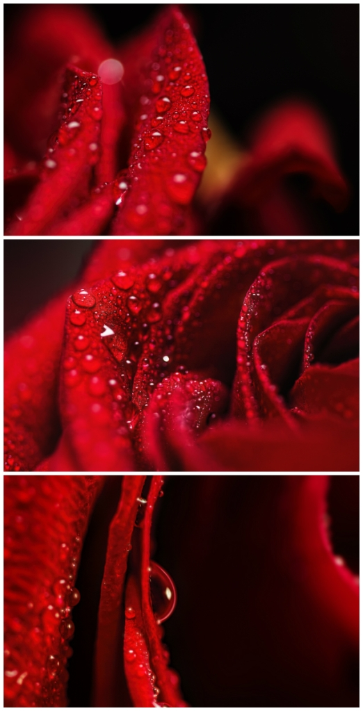 rose_collage