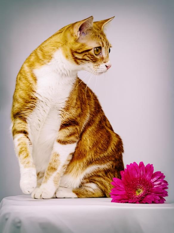 flowery1