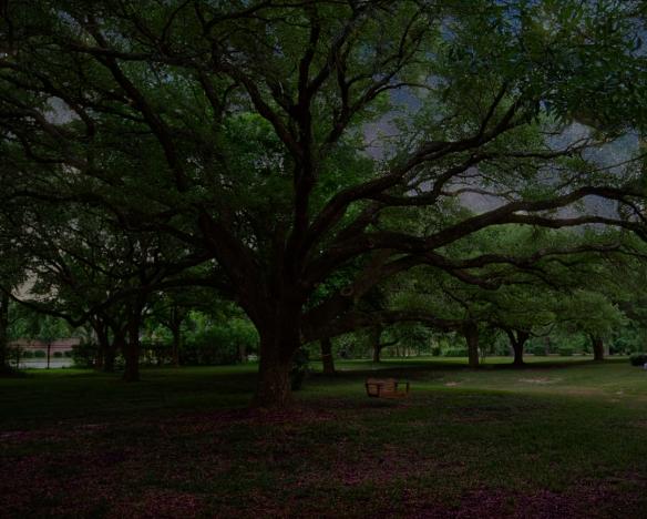 tree1a